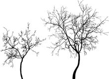 Silhouettes of the young trees Royalty Free Stock Photo