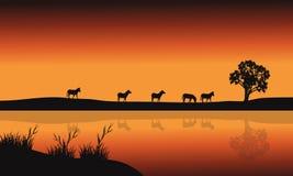 Silhouettes of zebara and lake Royalty Free Stock Photo