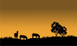 Silhouettes of a zebra and tree against Royalty Free Stock Image