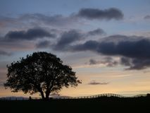 silhouettesolnedgångtree arkivbild