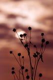 silhouettesunet Fotografering för Bildbyråer