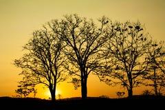 silhouettetree arkivfoto