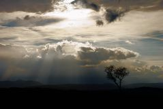 silhouettetree Royaltyfria Foton