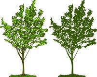 silhouettetree Arkivbild