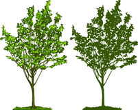 silhouettetree royaltyfri illustrationer