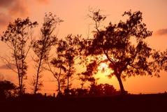 silhouettetrees Royaltyfria Bilder