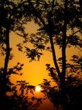 silhouettetrees Arkivfoton