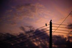Silhouettez l'oiseau de deux couples été perché sur le poteau électrique Photographie stock