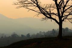 Silhouettez la branche d'arbre et l'arbre de moutain à l'arrière-plan de coucher du soleil photographie stock libre de droits