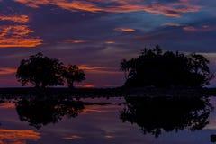 Silhouettez la pousse de la vue de paysage de l'arbre au crépuscule Image stock