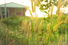 Silhouettez le champ d'herbe devant la maison avec la lumière de jante de lumière du soleil Photo stock