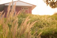 Silhouettez le champ d'herbe devant la maison avec la lumière de jante de lumière du soleil Photos libres de droits