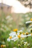 Silhouettez le champ d'herbe devant la maison avec la lumière de jante de lumière du soleil Photographie stock