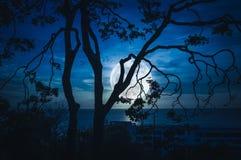 Silhouettez les branches des arbres contre le ciel et la pleine lune au-dessus de la mer illustration de vecteur