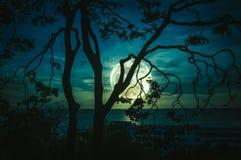 Silhouettez les branches des arbres contre le ciel et la pleine lune au-dessus de la mer photo stock