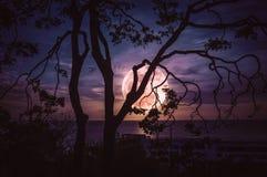 Silhouettez les branches des arbres contre le ciel et la pleine lune au-dessus de la mer image stock