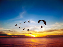 Silhouettez les oiseaux de vol et le moteur de Para au-dessus du ciel de coucher du soleil de mer Photo stock