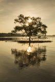 silhouettieren Sie alleinbaum in der Strand chumphon Südprovinz von t Lizenzfreie Stockbilder