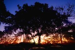 Silhouettieren Sie Bäume mit Sonnenunterganglicht am Abend lizenzfreie stockfotos