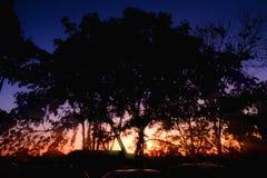 Silhouettieren Sie Bäume mit Sonnenunterganglicht am Abend stockbilder