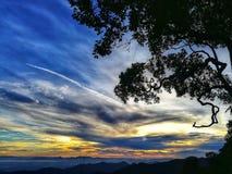 Silhouettieren Sie Bild des Baums und des Himmels in der Sonnenaufgangzeit Lizenzfreie Stockfotos