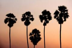 Silhouettieren Sie Bild von ToddyPalmen gegen Sonnenunterganghintergrund Stockfoto