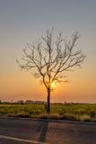 Silhouettieren Sie blattlosen Baum bei Sonnenuntergang mit orange Himmel im Hintergrund Stockbild