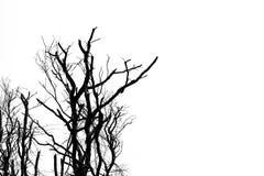 Silhouettieren Sie den toten Baum, der auf weißem Hintergrund für furchtsames oder d lokalisiert wird Lizenzfreies Stockbild