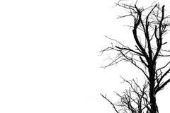 Silhouettieren Sie den toten Baum, der auf weißem Hintergrund für furchtsames oder d lokalisiert wird Stockbild