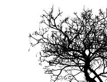 Silhouettieren Sie den toten Baum, der auf weißem Hintergrund für furchtsames oder Tod mit Beschneidungspfad lokalisiert wird Stockfoto