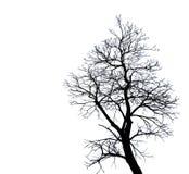 Silhouettieren Sie den toten Baum, der auf weißem Hintergrund für furchtsames oder Tod mit Beschneidungspfad lokalisiert wird Stockfotos