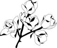 Silhouettieren Sie die blühende Magnolie, die auf weißem Hintergrund schwarz ist Lizenzfreies Stockbild
