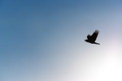 Silhouettieren Sie einen Vogel, der morgens zum blauen Himmel fliegt Stockfotografie