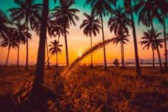 Silhouettieren Sie Grasblumen- und -kokosnussPalme auf Strand bei Sonnenuntergang Stockfotos