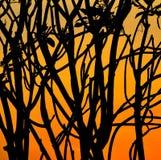 Silhouettieren Sie Gruppe des Niederlassungsbaums auf orange Sonnenunterganghintergrund Lizenzfreies Stockfoto