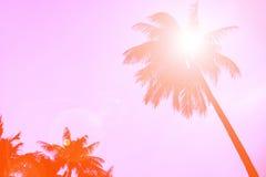 Silhouettieren Sie KokosnussPalme mit Blendenfleck, Retro- orange Farbhintergrund Lizenzfreie Stockfotografie