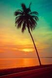 Silhouettieren Sie KokosnussPalmen auf Strand bei Sonnenuntergang Lizenzfreie Stockfotografie