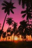 Silhouettieren Sie KokosnussPalmen auf Strand bei Sonnenuntergang Stockbilder
