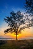 Silhouettieren Sie Konzept, Schattenbild von Bäumen bei Sonnenuntergang auf der Strandsonnenuntergangzeit stockfoto