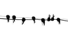 Silhouettieren Sie Migrierenschwalbe Stockbilder