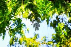 Silhouettieren Sie tropische Anlagen auf blauem Himmel, grüne Blätter des Farns in den Tropen Konzeptsommer und -feiertag Wald de Lizenzfreie Stockfotos
