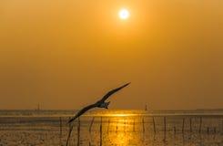 Silhouettieren Sie Vogelfliegen mit See- und Sonnenhintergrund Lizenzfreies Stockbild