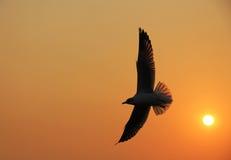 Silhouettieren Sie Vogelfliegen mit See- und Sonnenhintergrund Stockfotos