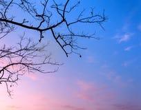 Silhouettiert Baumaste mit Himmel Sonnenuntergang Hintergrund für desig Stockbild