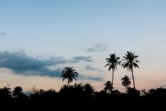 Silhouettiert Szene von Palmen in der Dämmerung nach Sonnenuntergang Stockbilder