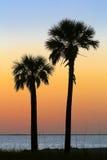Silhouettierte Palmen bei Sonnenuntergang Stockfotografie