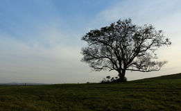 Silhouettierter Baum Stockbilder