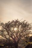 Silhouettierter Baum Stockfoto
