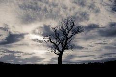 Silhouettierter Baum in der Sommerzeit stockfoto