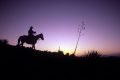Silhouettierter Cowboy Stockbilder